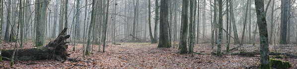 Misty autumnal forest at mornig with soft light of sun