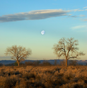 a scenic landscape with the setting moon between two trees