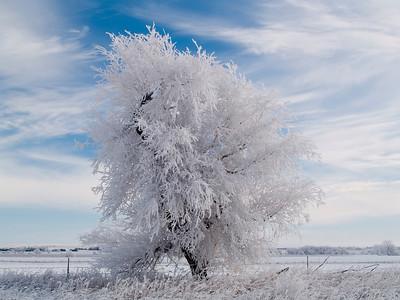 White along US highway 281 in Northern Nebraska on a December morning.