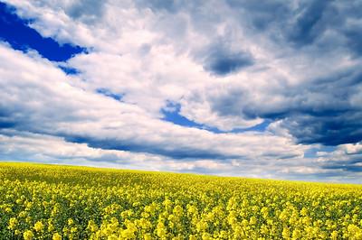The flowering field.