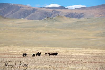 Altai mountains. Mongolia