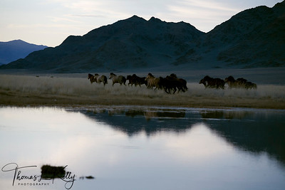 Bayan Olgii. Mongolia.