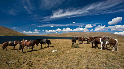 Horses at Blue Lake. Mongolia.