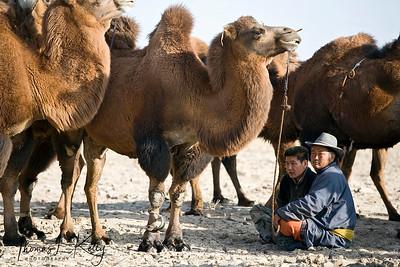 Gobi, Mongolia.