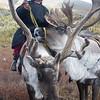 West Taiga, Mongolia.
