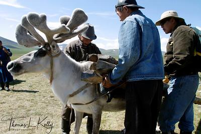 Reindeer People in West Taiga, Mongolia.
