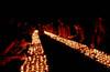 Monks and Nuns offer butter lamps at Mahabodhi Temple. Kalachakra Initiation, Bodhgaya, India.