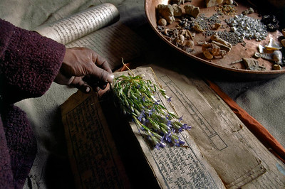 During the 7 day long Potenization Ceremony, medicinal Plants, minerals and bones are laid over sacred texts which is believed to contribute to the potenization of them. Chang Tang Nyee, Ladakh.