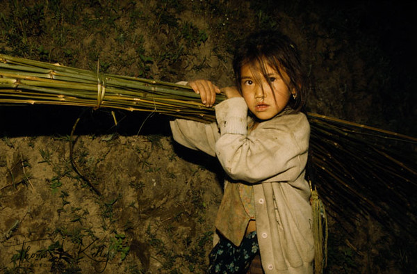A young Tamang girl carrying nigalo (bamboo) that her father has cut down to make doko (baskets). Young girls are bound to contribute labour to their family instead of going to school for formal education. And the fact remains is that parents are too poor to afford school fees. Sindupalchowk, Nepal.