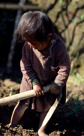 For Nepalese children work starts from the time they learn to walk. Sindhupalchok, Nepal.
