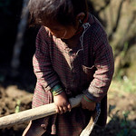 For Nepalese children work starts from the time they learn to walk.Sindhupalchok, Nepal.