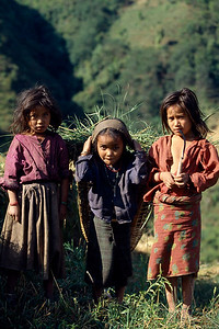 By cutting grass, for fodder, young kids as young as five contribute their labour for supplementing family income, instead of going to school. And the fact remains is that; parents are too poor to afford school fees. Sindupalchowk, Nepal.