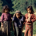 By cutting grass, for fodder, young kids as young as five contribute their labour for supplementing family income, instead of going to school. And the fact remains is that; parents are too p ...