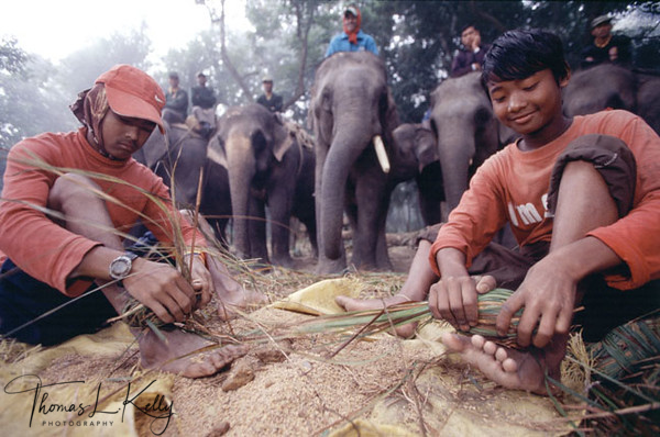 Employed by Wild Life Camp operators to prepare fodder for elephants.  Chitwan, Nepal.