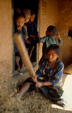 Tamang Girl beating rippen barley. It's like norm in Nepal, that a girl child have to take care about household work at the age of as early as five while boy child can enjoy education. Sindupalchowk, Nepal.