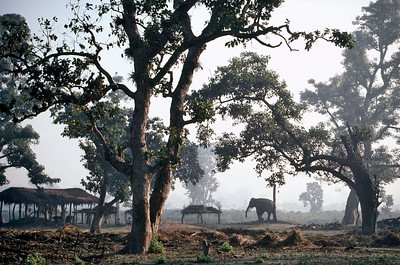 Elephants shelter. Chitwan National Park, Chitwan, Nepal.