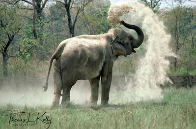 Elephant sand-bathe. Chitwan National Park, Chitwan, Nepal.