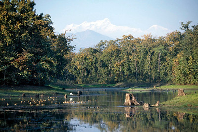 Overview of Chitwan National Park.  Chitwan, Nepal.