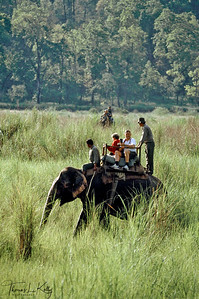 Wandering around on elephant back in southern Nepal's subtropical Chitwan National Park. Most tourists visit Chitwan's jungle and grasslands in search of one-horned rhinos, wild boar, black bear, deer, monkeys, bird life and the elusive Royal Bengal tiger. Chitwan, Nepal.