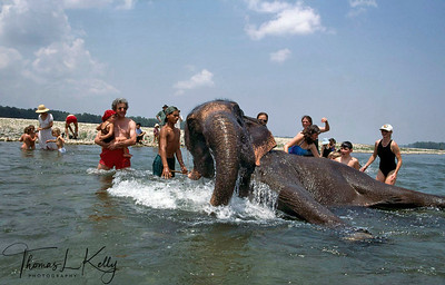 Westerners enjoying the elephant bath in Rapti river. Chitwan National Park, Chitwan, Nepal.