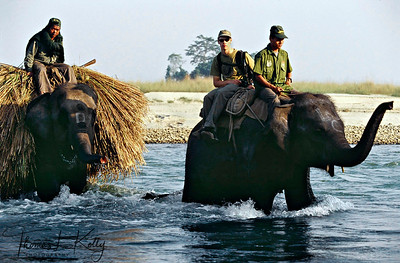 Elephants carrying fodder.  Chitwan National Park, Chitwan, Nepal.