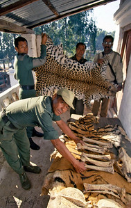 Hunting and poaching, widespread land clearance and the resulting loss of habitat have a devastating effect on the country's wildlife. Chitwan National Park, Chitwan, Nepal.