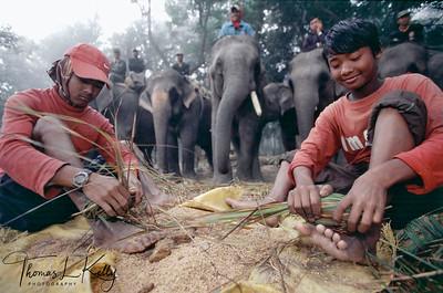 Mahouts (Elephant man) making fodder for elephants.  Chitwan National Park, Chitwan, Nepal.