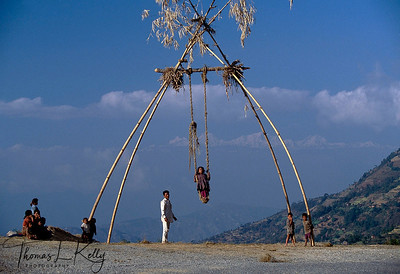 With the great harvest celebration of Dashain, communally made bamboo swings—ping are erected all over the valley.
