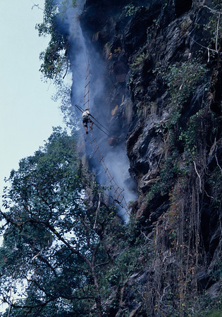 Honey Hunters of Nepal.   The Gurung men of Nepal are master honey hunters, risking their lives collecting honeycomb in the foothills of the Himalayas, using nothing more than handmade rope ladders and long sticks known as tangos.  Chimro cliff, Siklis village. Western Nepal.