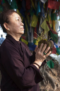 Buddhist pilgrim hold Bodhi tree leaves in between her palms as she pays homage. Bodhi tree leaves are considered sacred for Buddha meditated under this tree. Lumbini, Nepal.