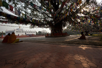 Sri Lankan monks meditate under Bodhi tree in front of the Mayadevi Temple. Lumbini, Nepal.
