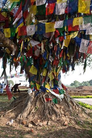 Prayer flags offerings on and around Bodhi tree in Lumbini. Nepal.