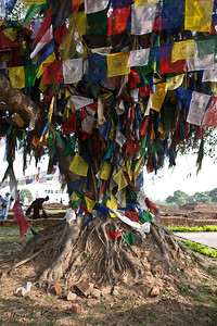 Prayer flags offerings on and around Bodhi tree in Lumbini. Nepal.