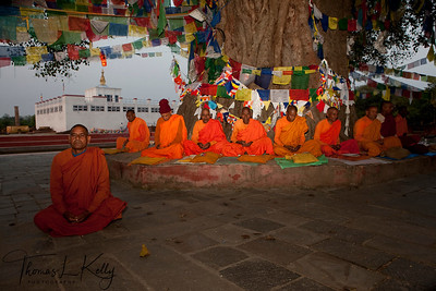 Sri Lankan monks pray under Bodhi tree in front of the Mayadevi Temple. Lumbini, Nepal.