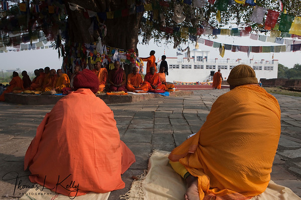 Buddhist pilgrims from various denominations pray under Bodhi tree in front of the Mayadevi Temple. Lumbini, Nepal.