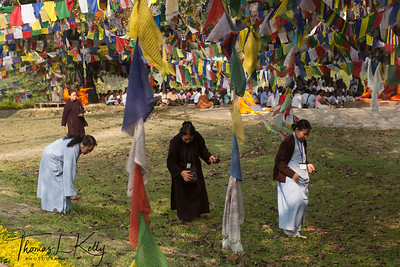 Buddhist pilgrims collects fallen Bodhi Tree leaves inside Lumbini Complex. Leaves are considered to be sacred for Gautam Buddha meditated under it. Nepal.