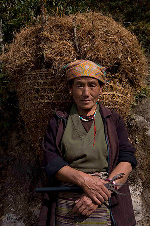 Sherpa woman rests as she makes her way home collecting dried pine leaves from nearby forest. Solu Khumbu, Nepal.