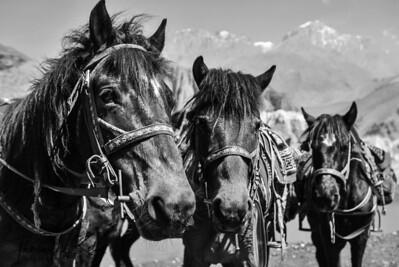 Mustang Trip