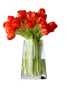 red tulips on a vessel