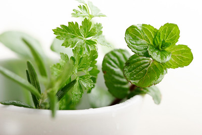 fresh mint,parsley and rosemary