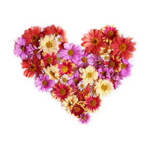 Chrysanthemums of different color in the shape of a heart