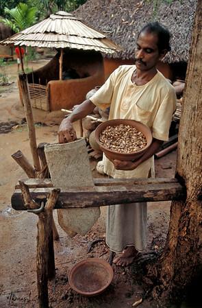 Pressing nuts to make natural massage oil.  Ulpotha, Sri Lanka.