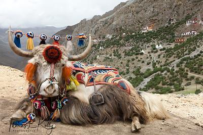 Drakyerpa, Tibet.
