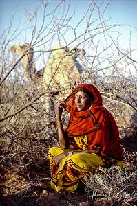 Nomad on Notice-Gabbra, Chalbi desert