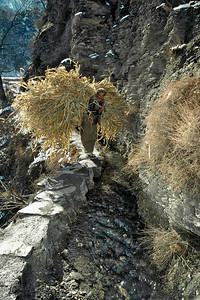Kalash walks along on the irrigation canal carrying fodder for stall-feeding his animals. The Kalash clan, located in Northern Chitral, Pakistan depend on farming and herding for a livelihood. Chitral, Pakistan.