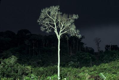 A spirit tree.