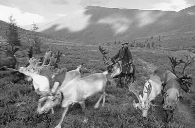 "75.Sanjim Herding Reindeer Home, West Taigaa, Mongolia Museo Fine Art Paper. (B&W Digital Print)  Dimensions: 13.17"" x 20"" Edition: 1/25"