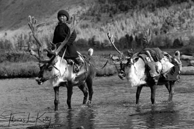 "Tsaatan Boy Riding Reindeer, West Taigaa, Mongolia Museo Fine Art Paper. (B&W Digital Print)  Dimensions: 13.273"" x 20"" Edition: 1/25"