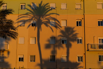 Palm Trees 1. Cádiz 2016