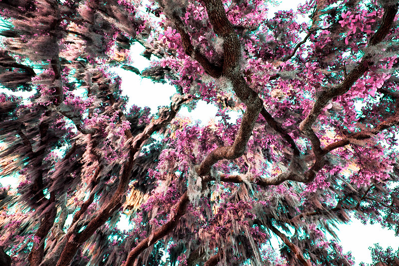 "ETC-3112  ""Pink Mossy Tree"""